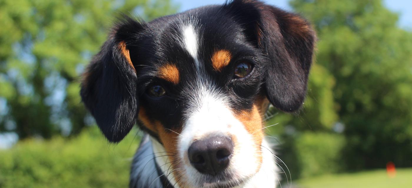 Dog Grooming Keynsham