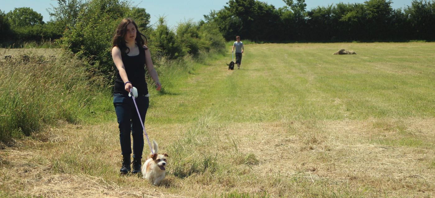 Dog Boarding Kennels Bristol Uk