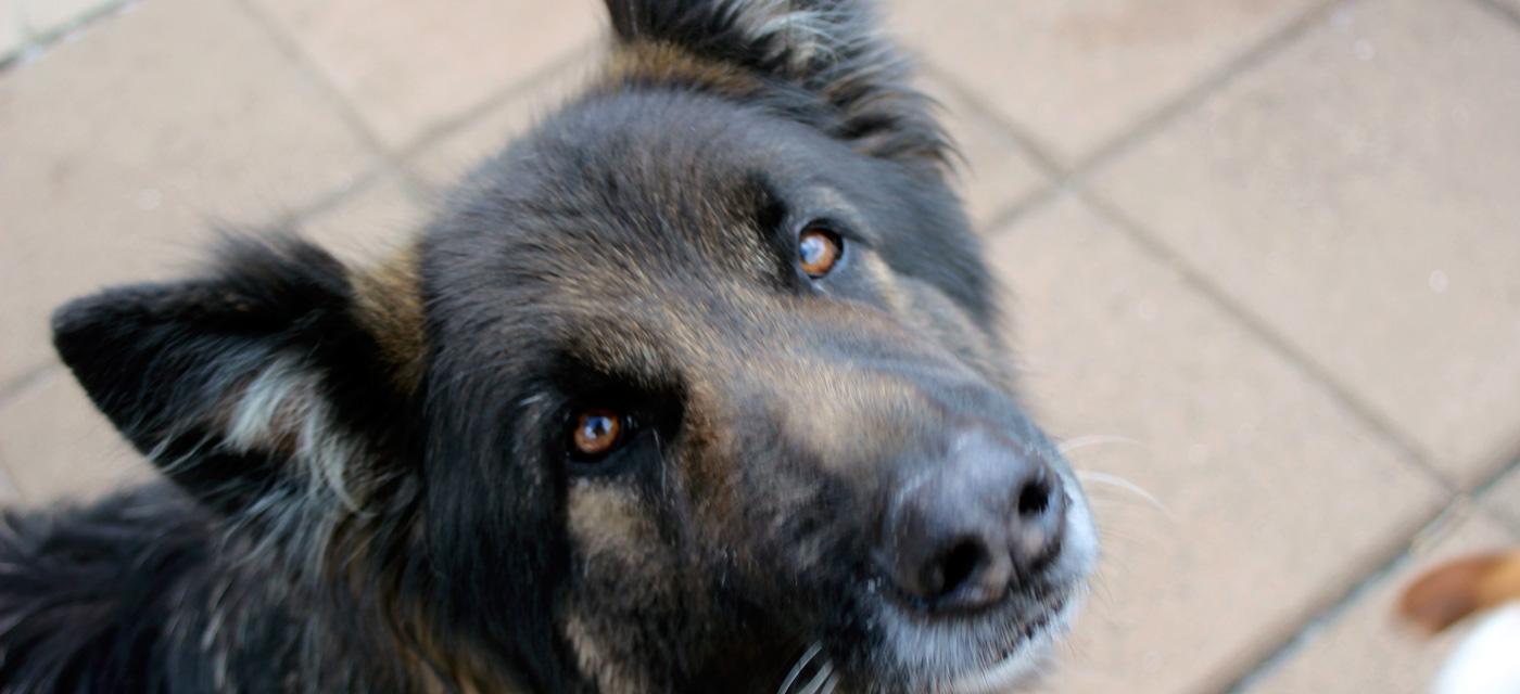 Boarding Kennels Dogs Bristol